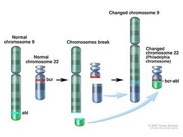 Výsledek obrázku pro gleevec mechanism of action gist