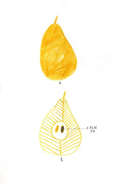 Some Pears. Illustration for cookbook.