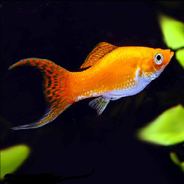 Various Type of Ornamental Fish You Need to Consider ...