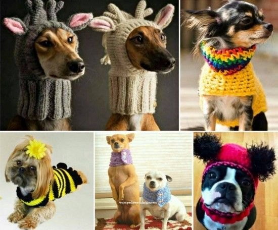 Dog Crochet - check out all the FREE Patterns in our post and the amazing Cat Hat Crochet too.