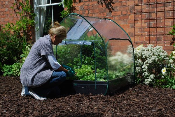 Buy Pop up cloche cover for grow bed: Delivery by Waitrose Garden in association with Crocus