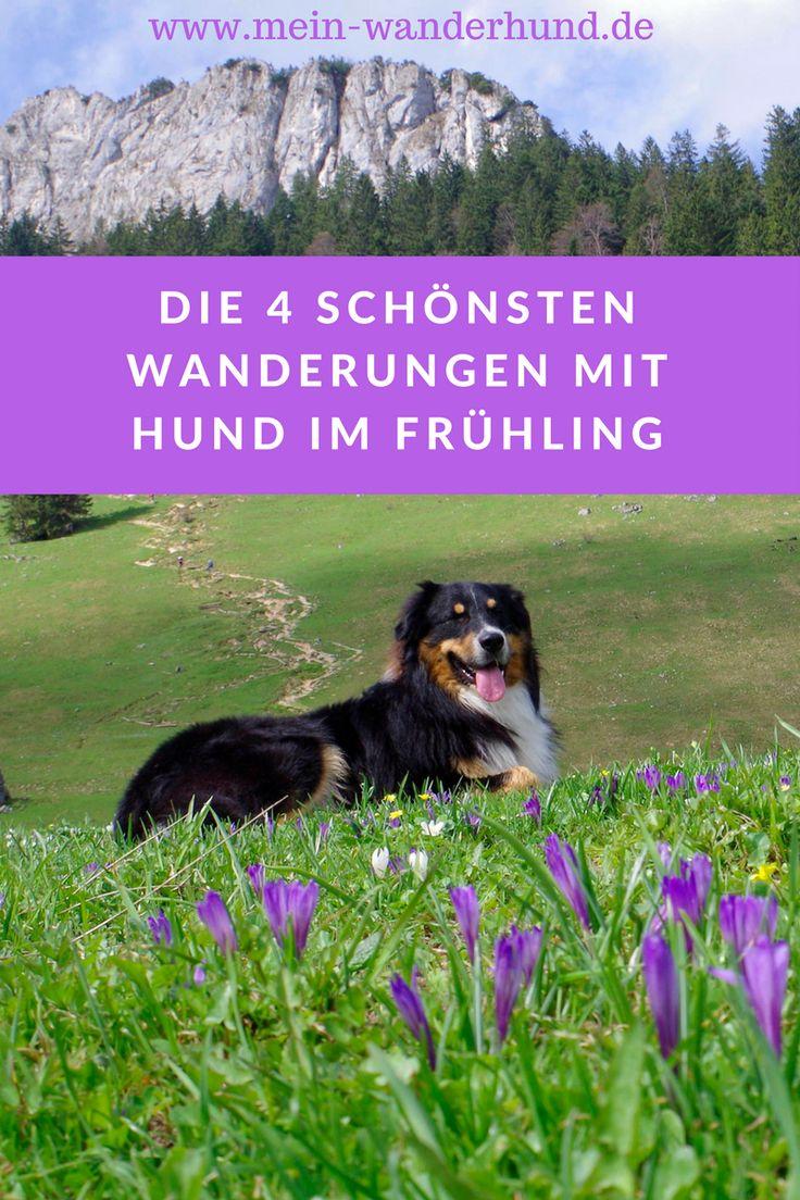 Unsere 4 schönsten Hundewanderungen fürs Frühjahr