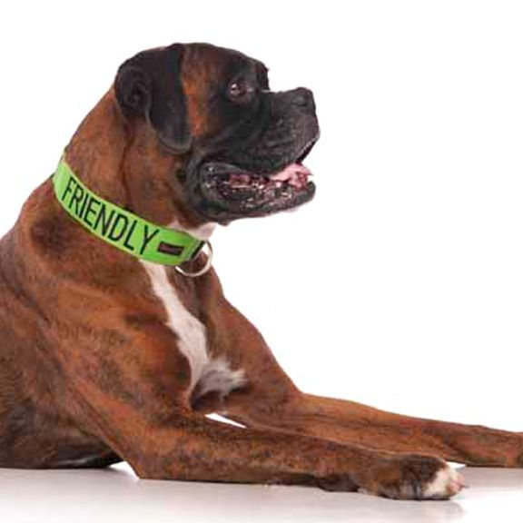 """Green FRIENDLY clip collar 