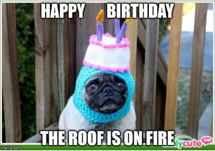 101 Funny Happy Birthday Dog Memes For Paw Lovers Everywhere In 2020 Happy Birthday Meme Happy Birthday Dog Happy Birthday Funny