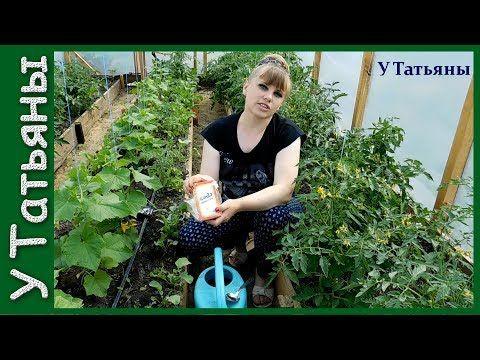 СОДА - спасатель вашего огорода! Пищевая сода - подкормка для: огурцов, томатов и других растений - YouTube