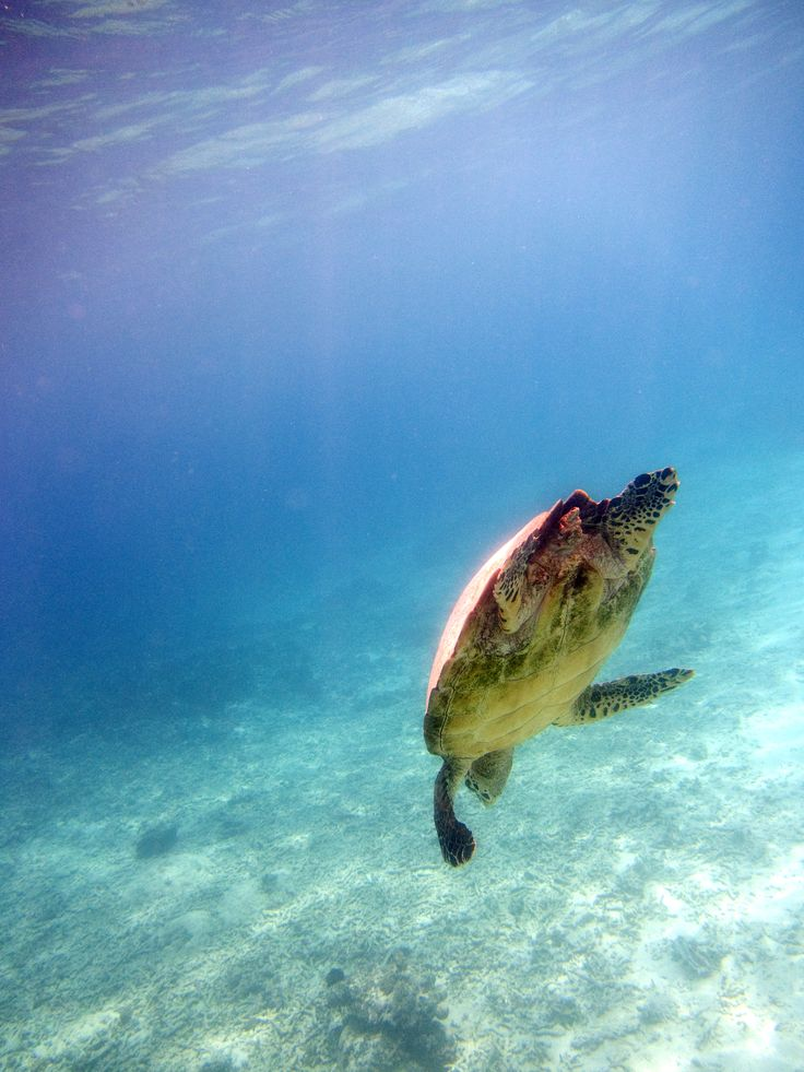 Some of the majestic marine life you can see whilst diving off Gili Trawangan.