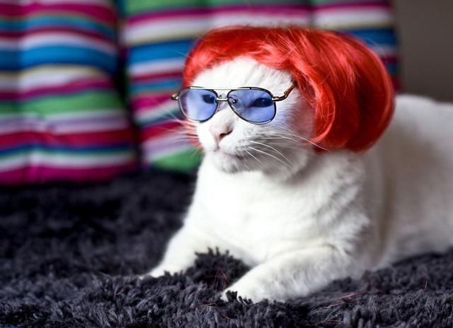 .Interesting Things, Cool Cat, Kitty Cat, Funny, Make Me Laugh, Stupid Cat, Wigs, Andy Warhol, White Cat