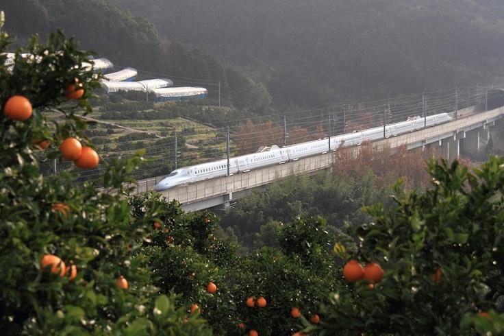 デコポン園から見る九州新幹線さくら