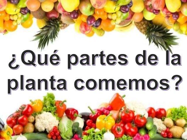 ¿Qué partes de la planta comemos? Una gran parte de lo que comen las personas se compone de plantas o de partes de una pla...