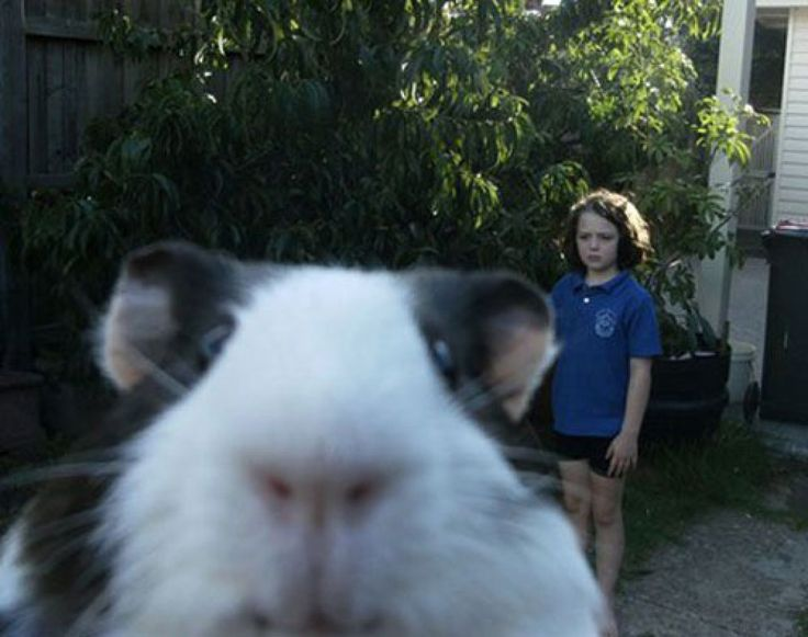 Best Animal Photobombs Images On Pinterest Funny Stuff - 35 hilarious animal photobombs ever