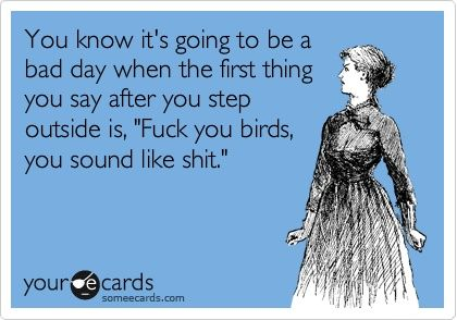 mega shit: E Card, Quote, Funny, Bad Day, Birds, Odds