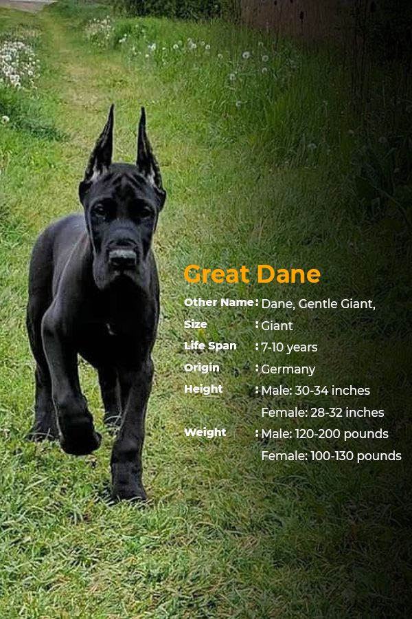 Dogs From Bigger Breeds Don T Live As Long As Smaller Ones The