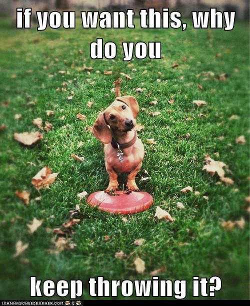 Loldogs n Cute Puppies - funny dog pictures - Cheezburger