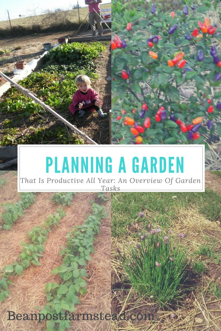 Organize your Garden planning for a productive garden all year long-  an overview of monthly tasks