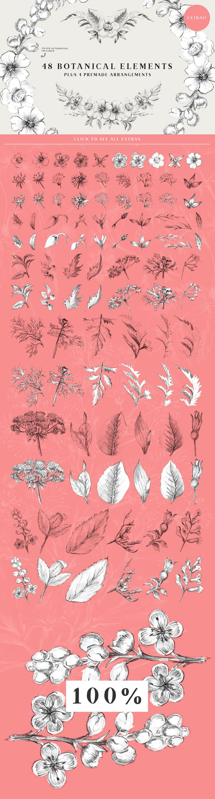 13 Botanical Illustrations & Extras by Vector Hut on @creativemarket