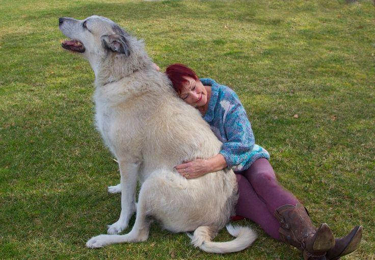 Dog Rescue Southern Ireland