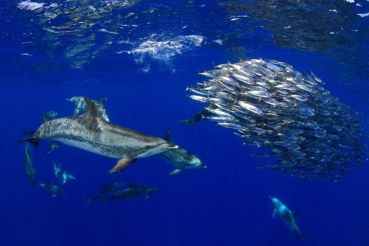 Photo de la vie sous-marine sur la côte de Tenerife en Espagne. (Crédit photo : Montse Grillo)