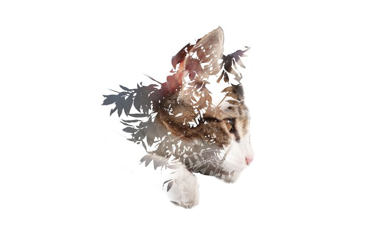 double exposure photography color - Google Search