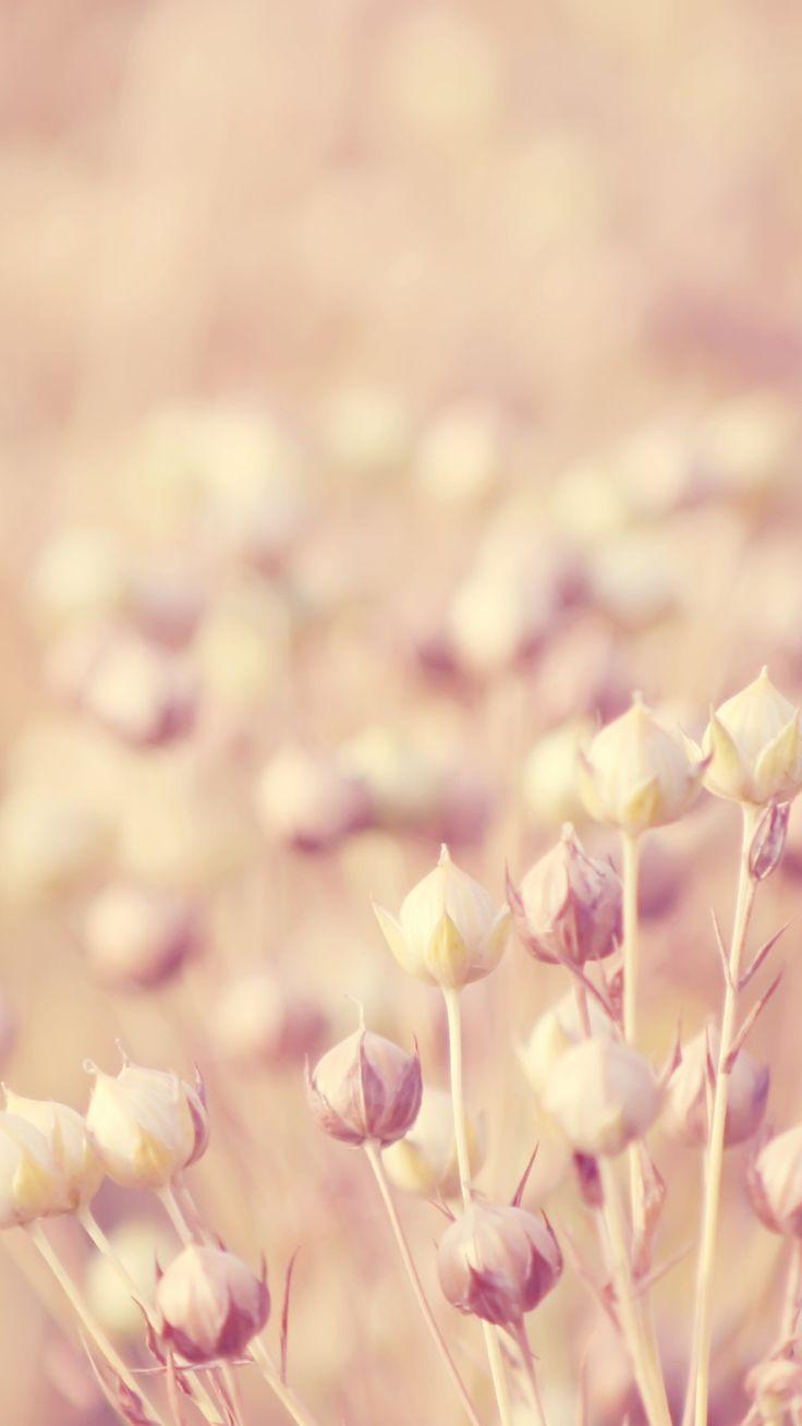 Flower Samsung Galaxy S5 Wallpapers 30