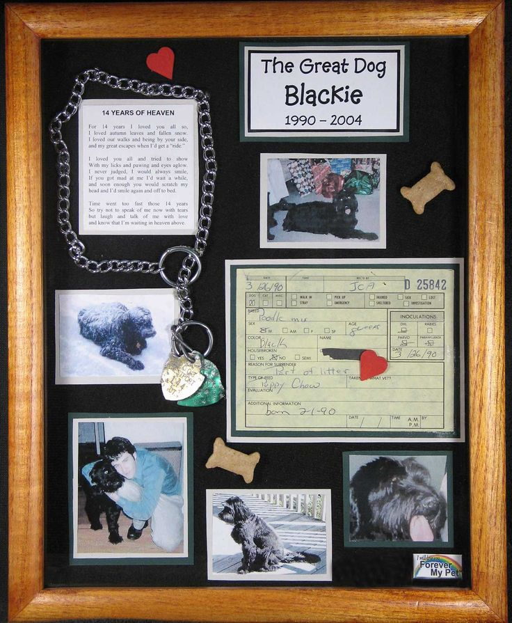 Memorial Shadow Box. Going to put one of these together for Jewel with a small portrait painting I will do :)  Need to do this for Charlie too, wish I had his collar :(
