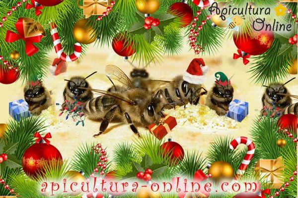 Albine de craciun