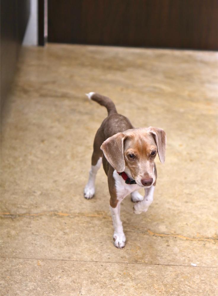 Nano Beagle on the move...