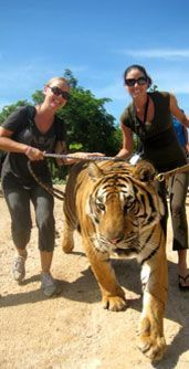 Tiger Temple Tours in Thailand... this needs to happen in my life