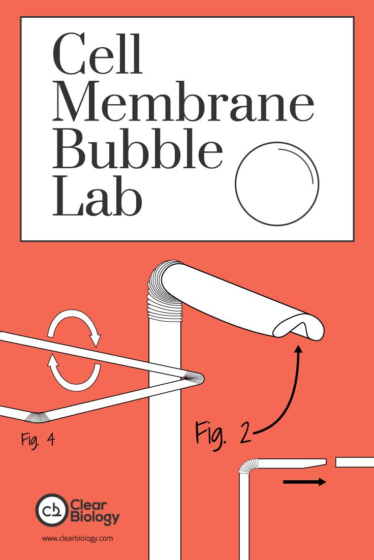 Cell Membrane Bubble Lab