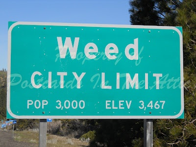Travels - High (up) in Weed California