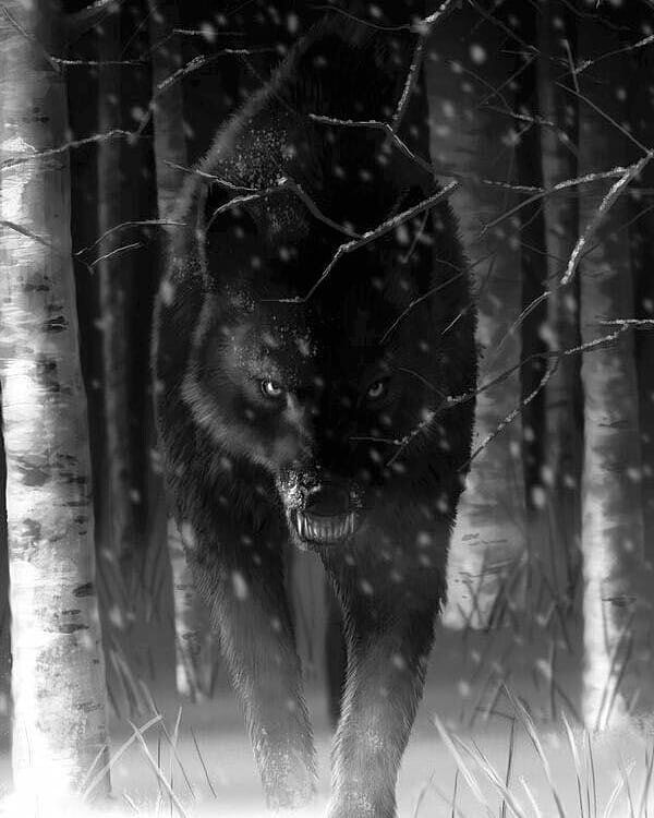Black Wolf, Scary Wolf, Wolf Tattoos