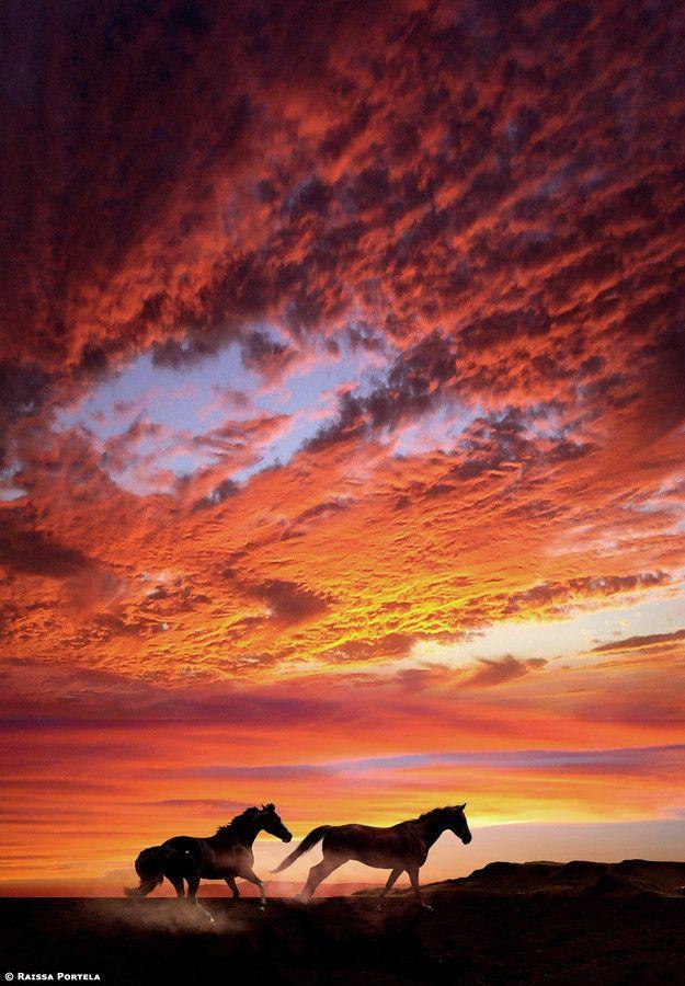 Caballos corriendo en atardecer  Foto: Christopher Lawrence