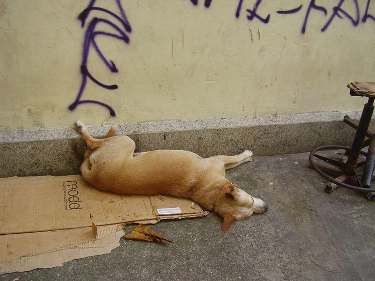 """Caramelo, cachorro de estimação dos """"moradores de rua"""" que """"moram vez ou outra"""" na calçada do portão dos fundos da Igreja da Santíssima Trindade.Foto de JuRicardo"""