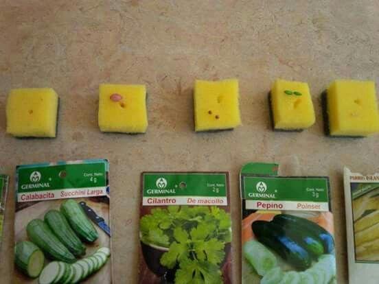paso 6  Cada semilla tiene tamaño, forma y color diferente, por lo cual es importante clasificarlas para anotar su crecimiento.