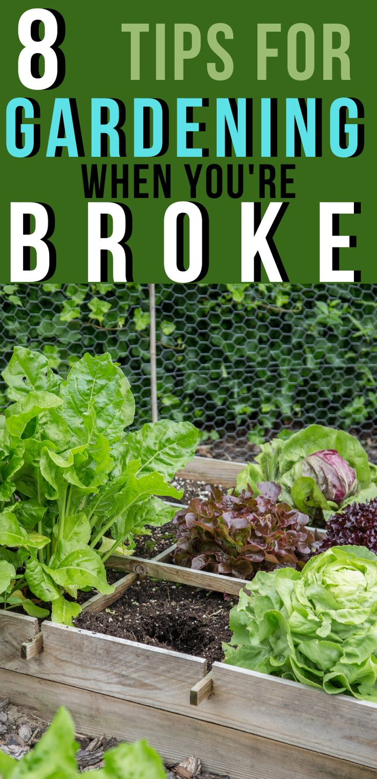 8 Gardening When You're Broke Tips » Family Growing Pains