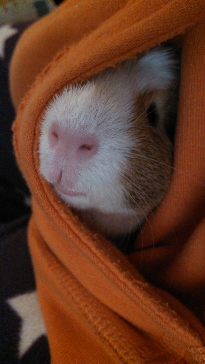 Pocket piggy