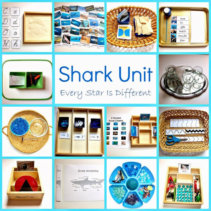 Every Star Is Different: Shark Unit w/ Free Printables for writing, pre writing, and much more! Montessori inspired.