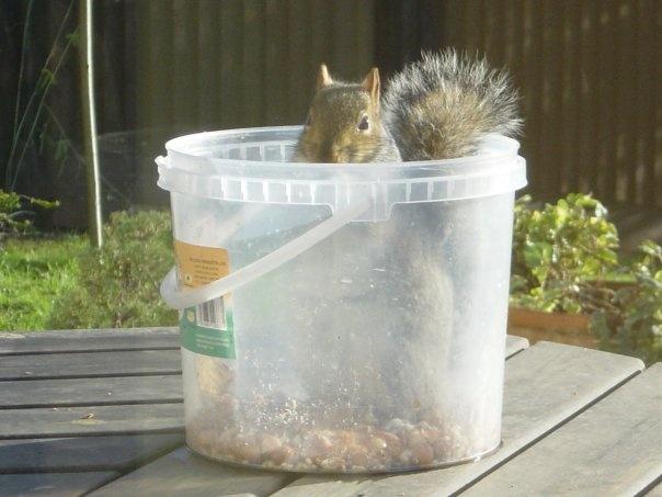 Bleedin' Squirrels.