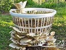 Как вырастить лесные грибы на даче? Как вырастить грибы на дачном участке?