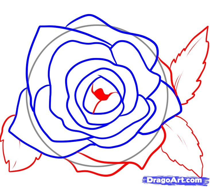 Draw rose petals if you paint  roses pinterest