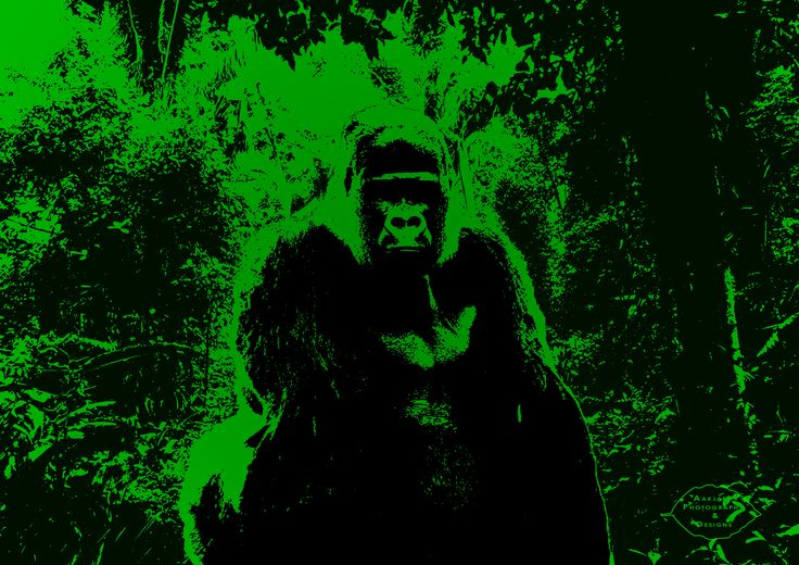 Gorilla made for a birthday card #gorilla #jungle #wallpaper #monkey #ape #primate #silverback