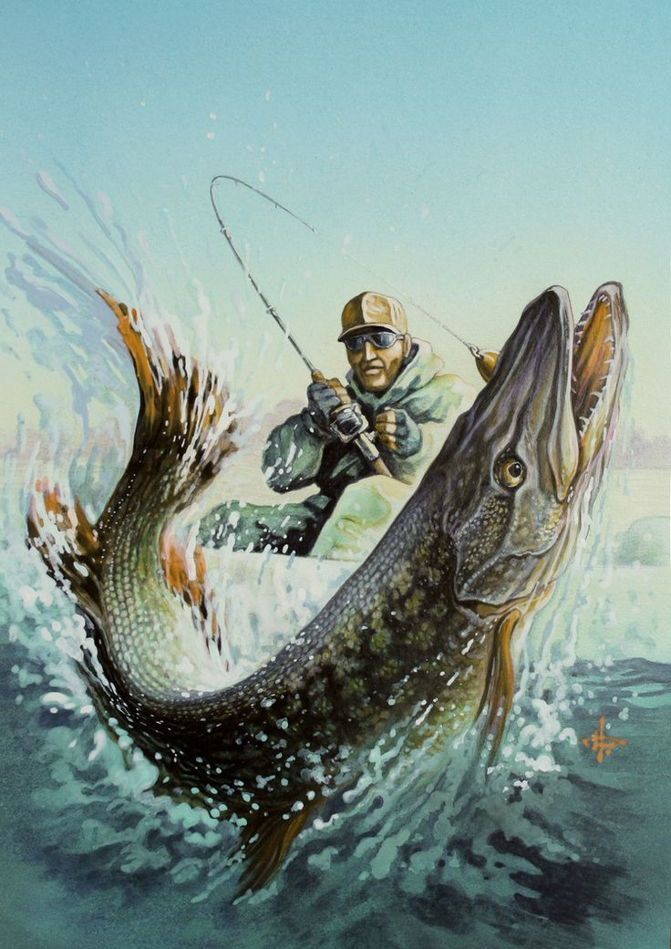 366 best images about fish fishing art and stuff on for Fishing for pike
