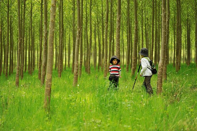imagine childhood blog with ideas for nature walks, gardening, stories...