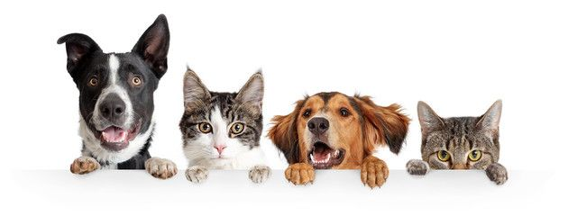 Cats And Dogs Peeking Over White Web Banner Spon Peeking Dogs Cats Banner Web Ad Dog Peeking