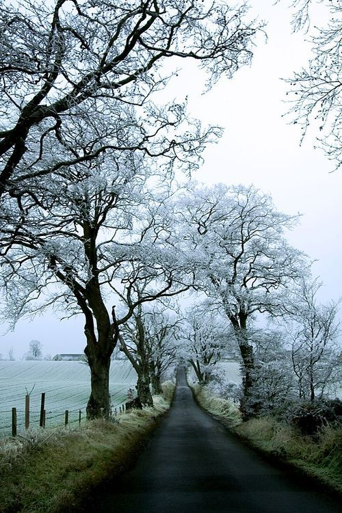 Ooo this picture makes me feel less threatened by incoming winter. Frosty walks are definitely a good thing.