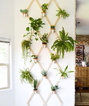 10 Indoor Garden Ideas to Cure the Winter Blues