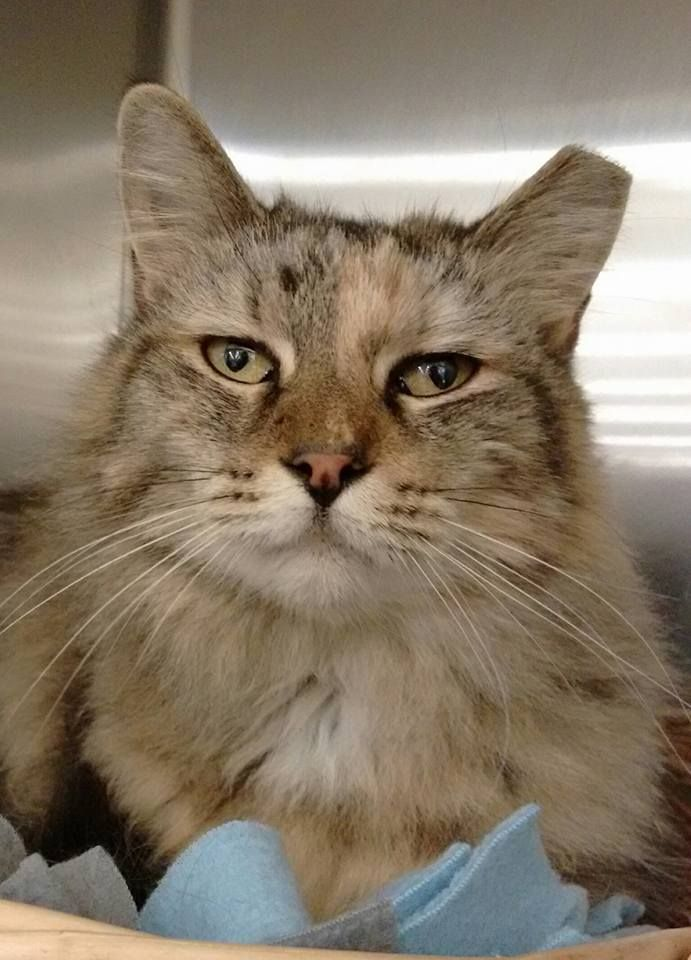 Happy Cat Rescue specializes in the rescue and placement of abused, unwanted and abandoned companion animals. We never discriminate on the basis of health, age or breed. #cats #catrescue #animalrescue
