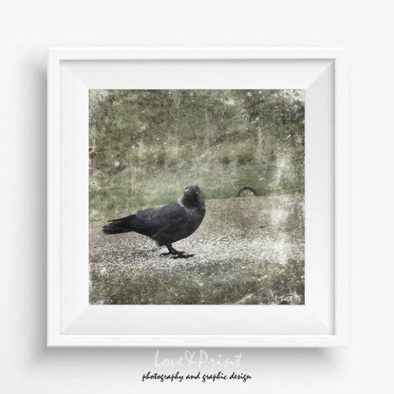 Raven wall decor crow picture birds photography printable