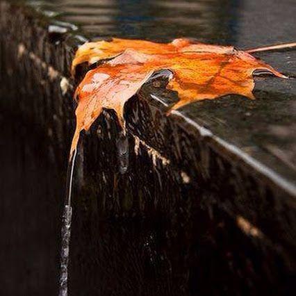 Bonito si llueve y disfrutas el momento  ... Finalizando una semana cargada!! Hoy a descansa...  Feliz domingo!!  #mibanoenruinas #lluvia