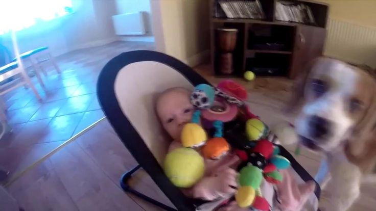 Guilty Dog Apologizes for Stealing Baby's Toy