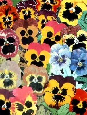 Beautiful patch of pansies! #Theta1870